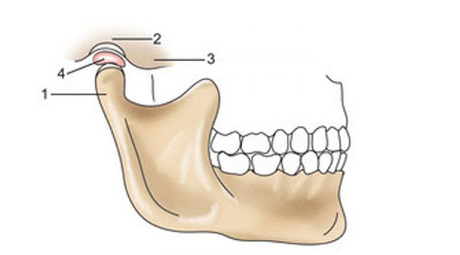 Анатомия зуба – челюстная кость