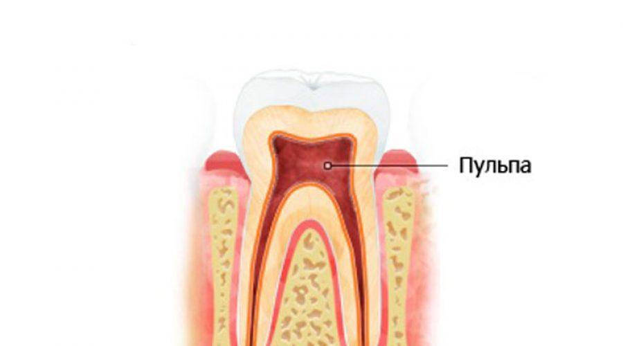 Анатомия зуба – пульпа