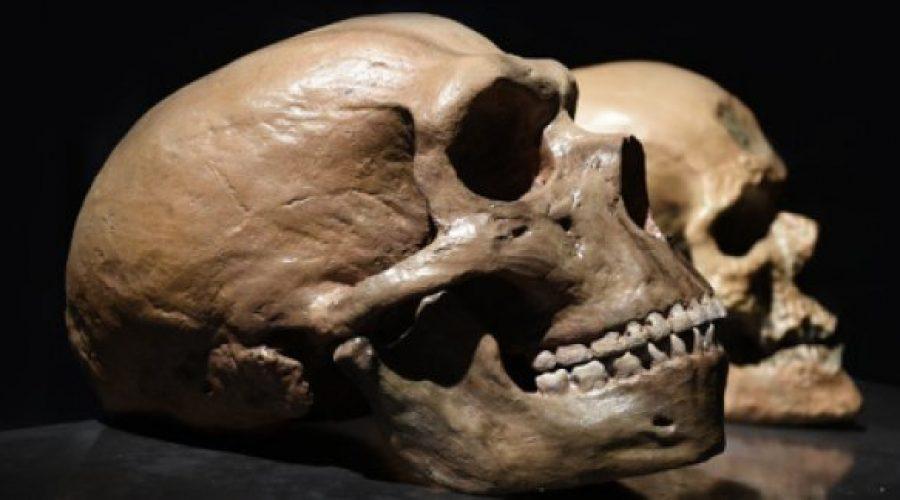 Неандертальцы использовали натуральные обезболивающие